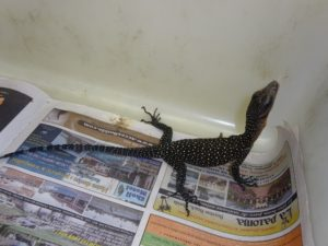 Peach Throat Monitor