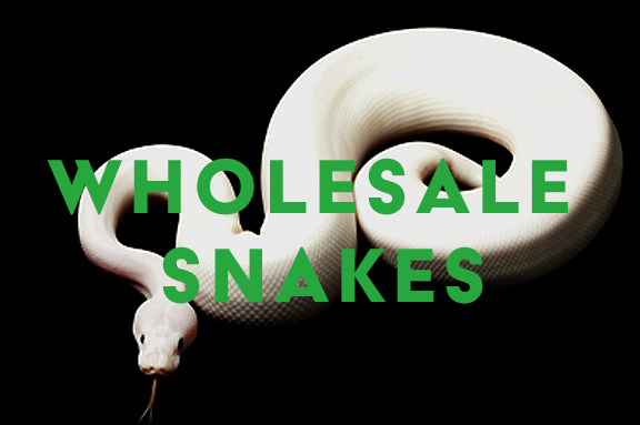 Wholesale Snakes