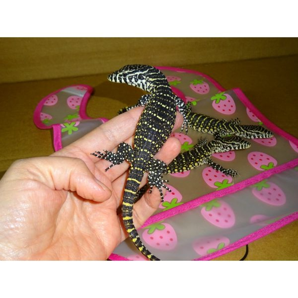 Nile Monitor baby in hand