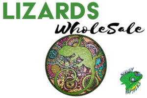Lizards Wholesale