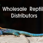 Wholesale Reptile Distributors