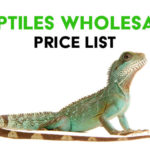 Reptile Wholesale Price List