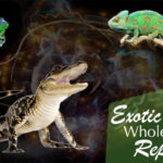 Exotic Pet Reptiles