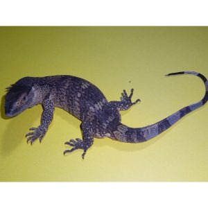 White Throat Monitor baby