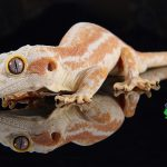 Exotic Reptiles Pet Shop