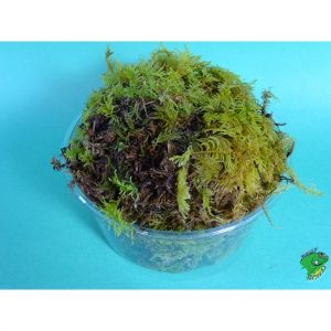 Live Moss stuffed in 48oz